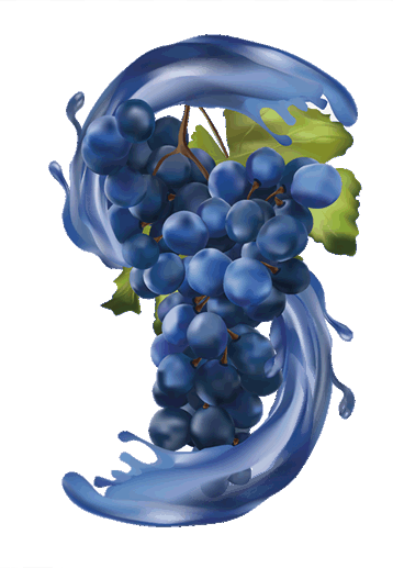 wine-grapes-illustration